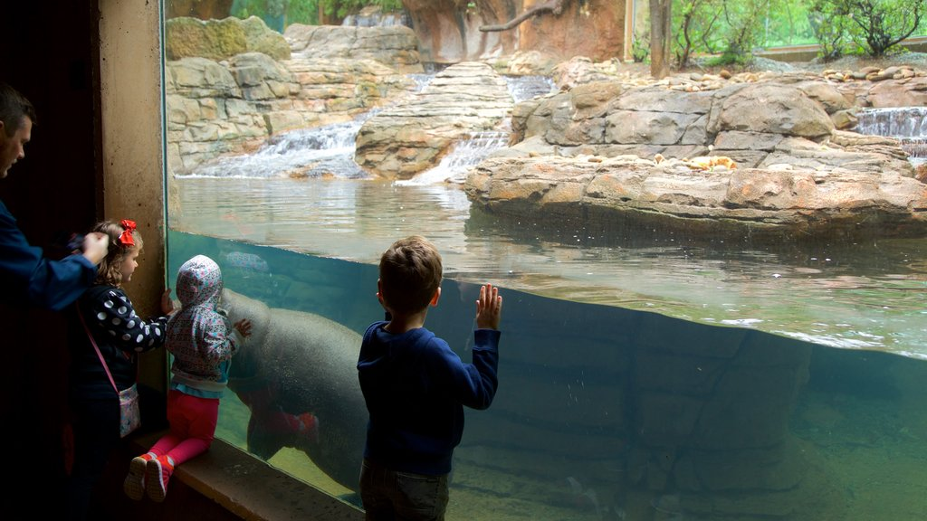 Louisville Zoo showing marine life as well as a family