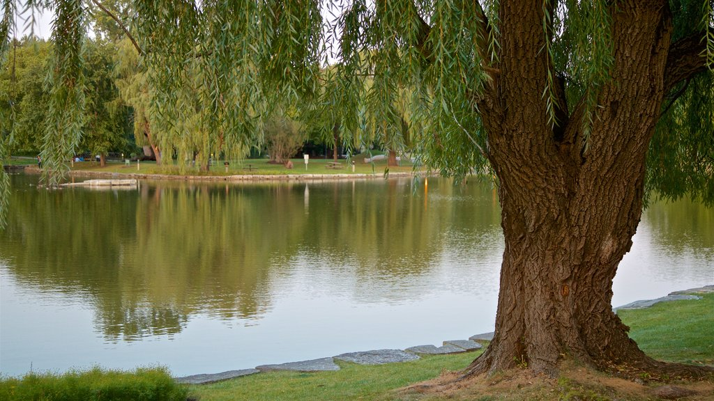 Schaumburg which includes a lake or waterhole and a garden