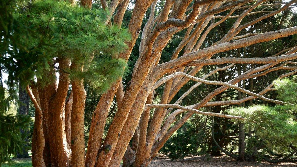 Morton Arboretum which includes a garden