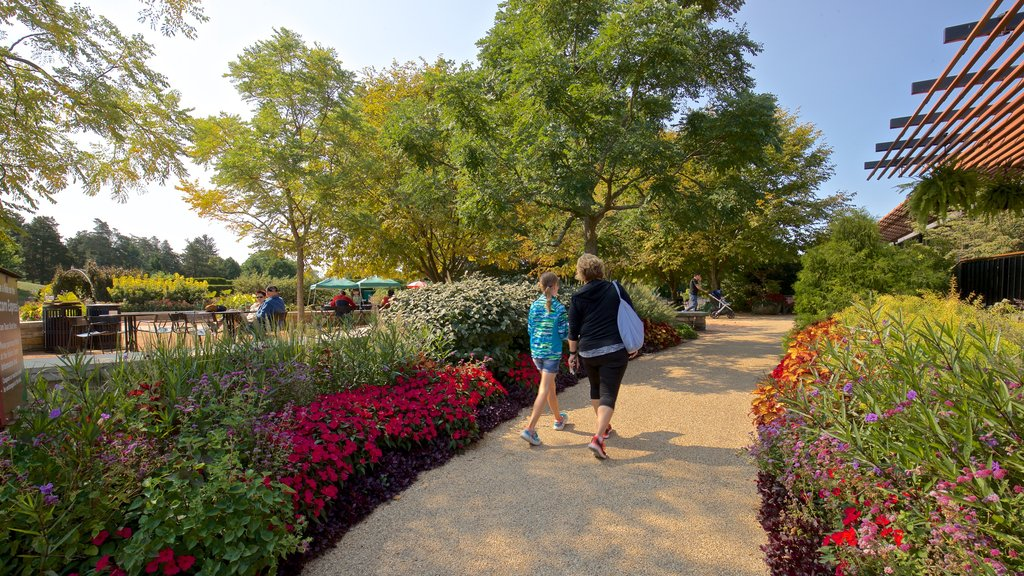 Morton Arboretum which includes wildflowers and a park as well as a family