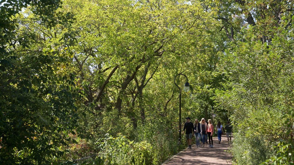 Naperville which includes hiking or walking and a park as well as a small group of people