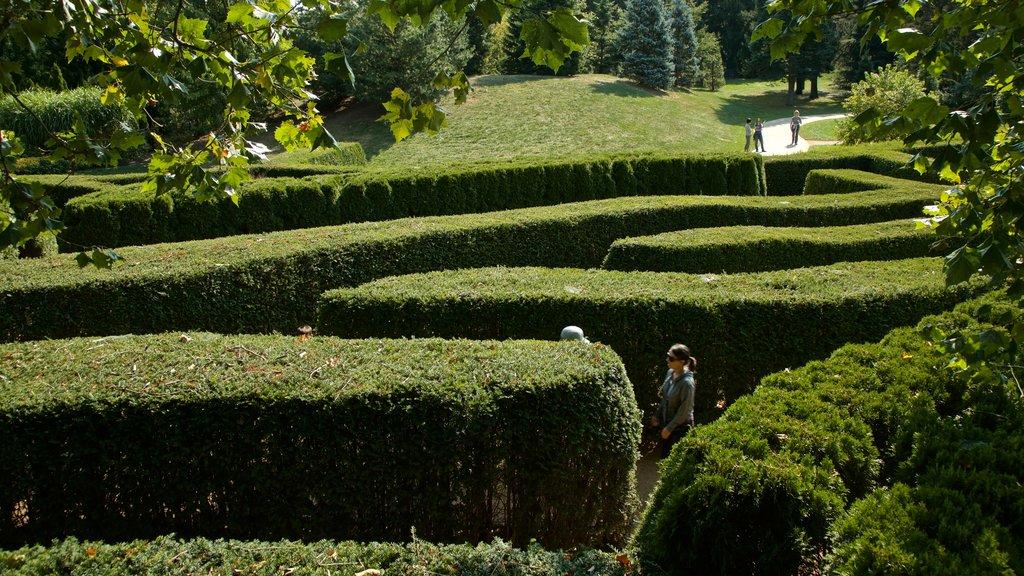 Morton Arboretum showing a park as well as a couple