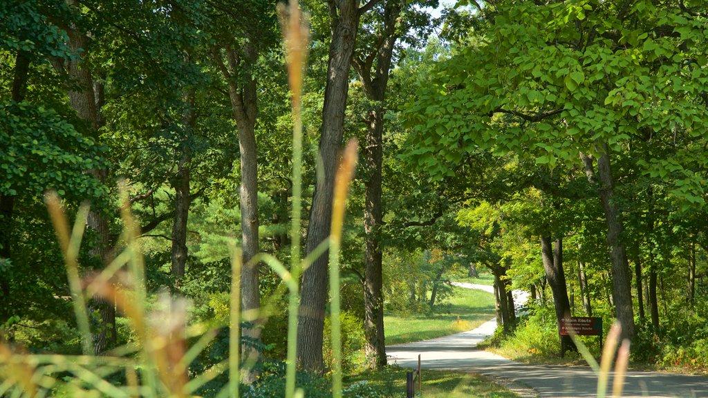 Morton Arboretum featuring a garden