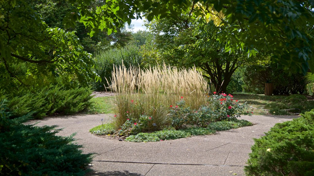 Luthy Botanical Garden featuring wildflowers and a park