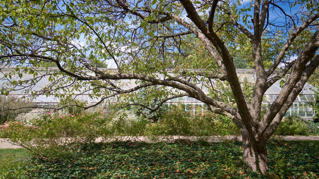 Luthy Botanical Garden featuring a park