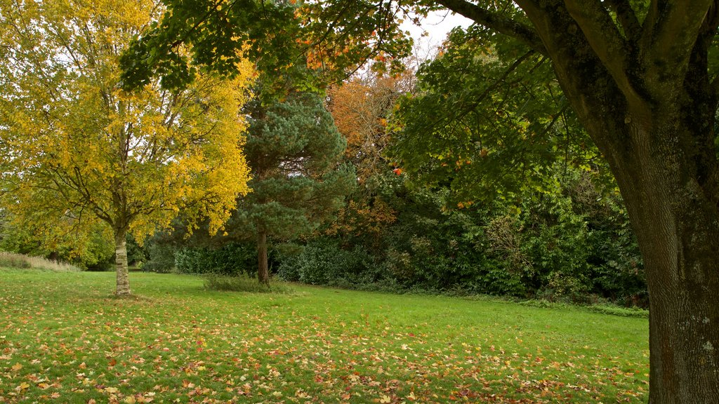 Ashton Court Mansion which includes autumn leaves and a garden