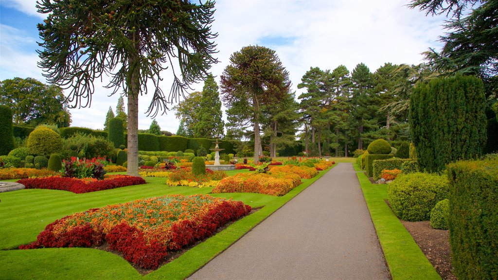 Brodsworth Hall featuring wildflowers, flowers and a park