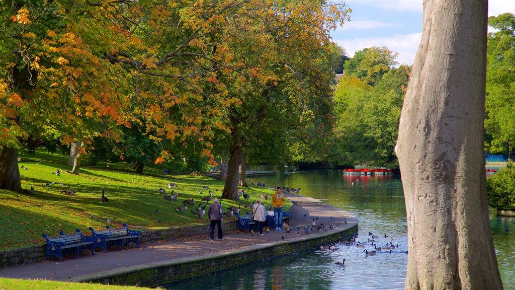 Parque Lister mostrando un estanque, un jardín y vida de las aves