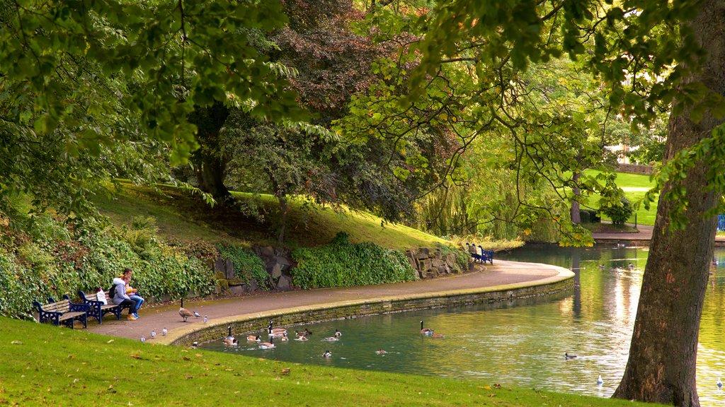 Parque Lister mostrando un estanque, un parque y vida de las aves