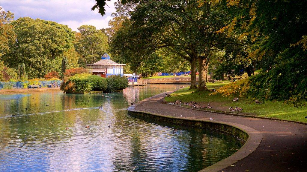 Parque Lister ofreciendo un parque, vida de las aves y un estanque