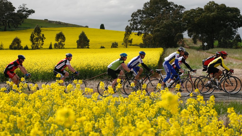 Shepparton featuring wildflowers and road cycling as well as a small group of people