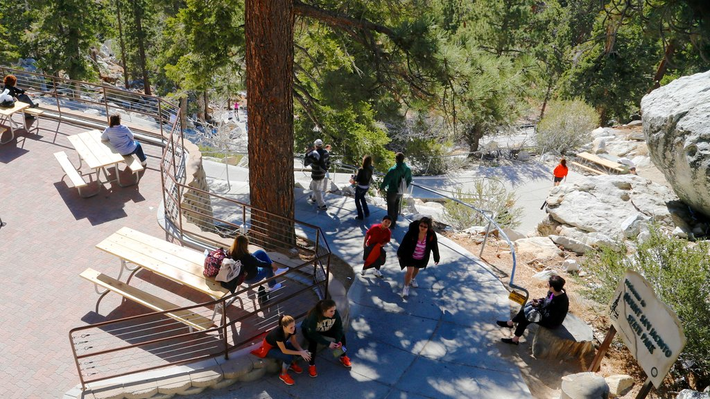 Palm Springs Aerial Tramway featuring a garden and hiking or walking