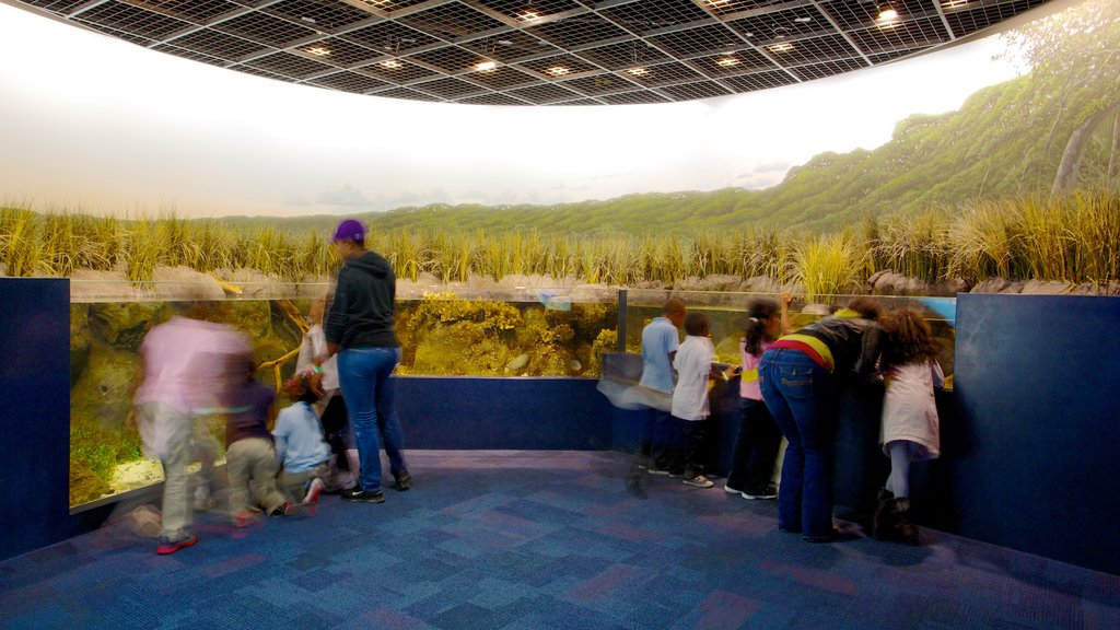 Discovery Place which includes interior views as well as a family