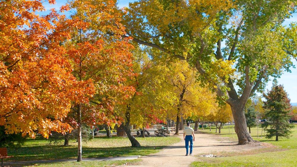 Rancho San Rafael Park que incluye hojas de otoño, vistas de paisajes y un parque