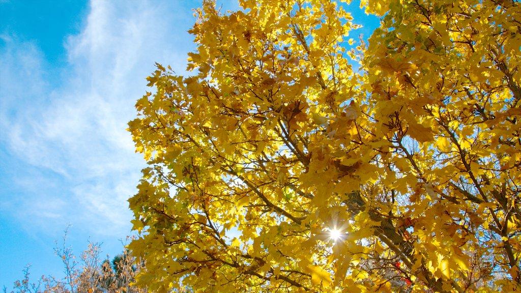 Rancho San Rafael Park que incluye los colores del otoño