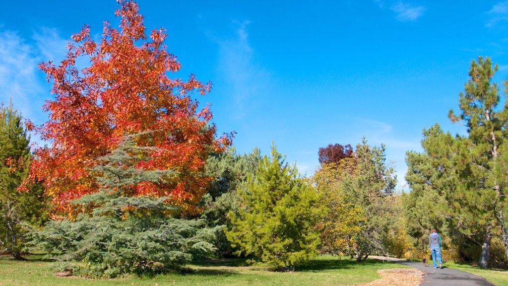 Rancho San Rafael Park showing a garden