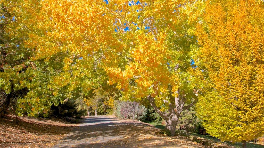 Rancho San Rafael Park que incluye un parque, vistas de paisajes y los colores del otoño