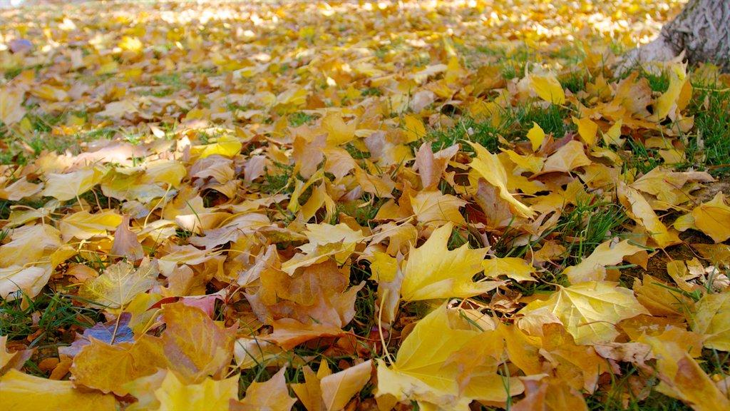 Rancho San Rafael Park mostrando hojas de otoño y un parque