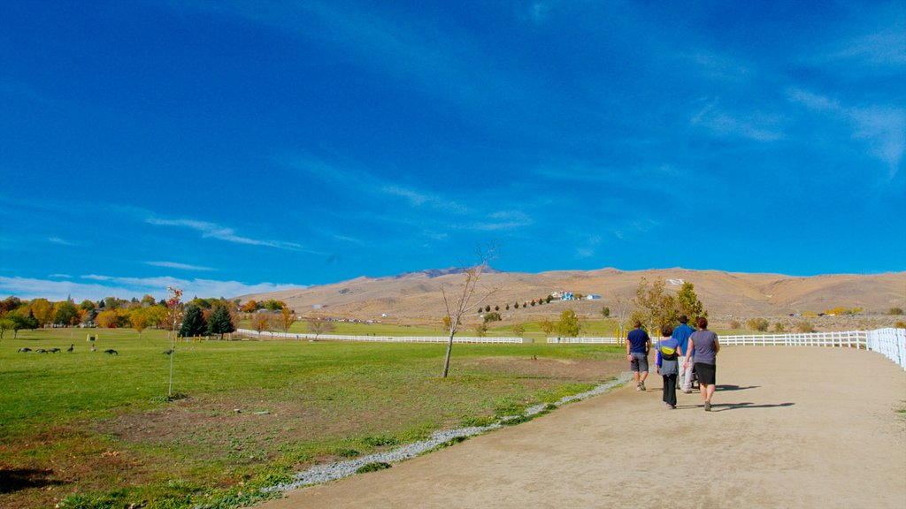 Rancho San Rafael Park showing landscape views, tranquil scenes and hiking or walking