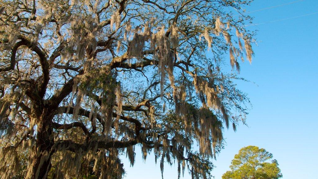 Magnolia Cemetery que incluye hojas de otoño y vistas de paisajes