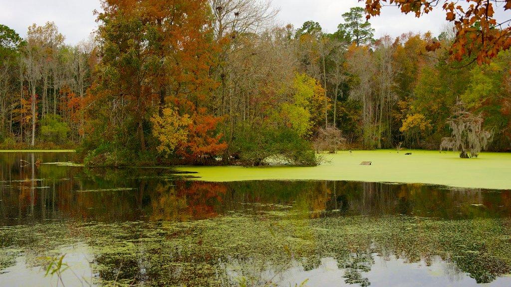 Magnolia Plantation and Gardens mostrando los colores del otoño, un estanque y un parque