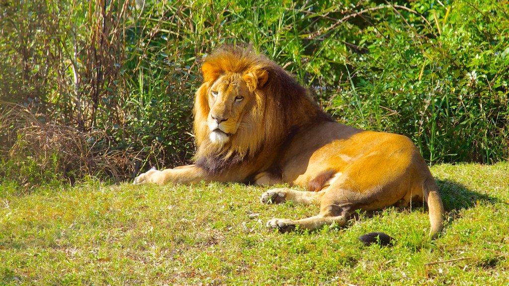 Busch Gardens ofreciendo aventuras de safari, animales del zoológico y animales peligrosos