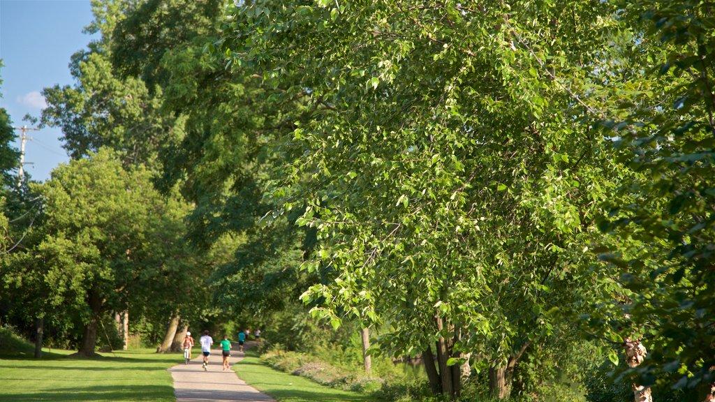 River Trail showing a park