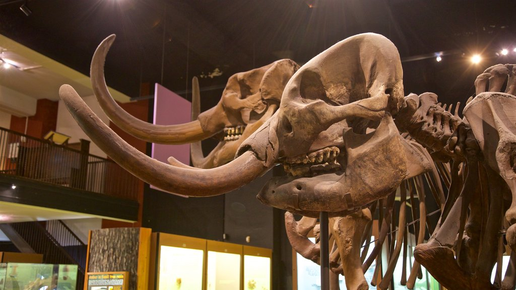 Exhibit Museum of Natural History at the University Of Michigan featuring interior views