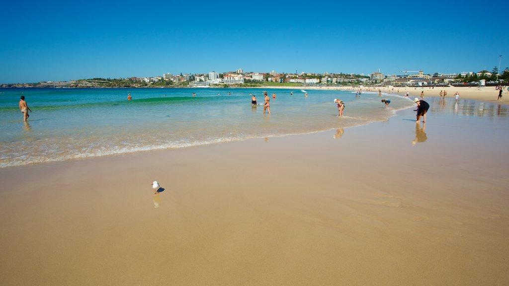 Bondi Beach ofreciendo una playa y natación