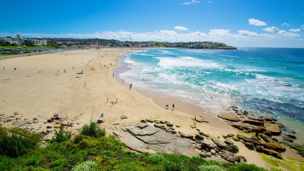 Bondi Beach which includes a sandy beach, tropical scenes and landscape views