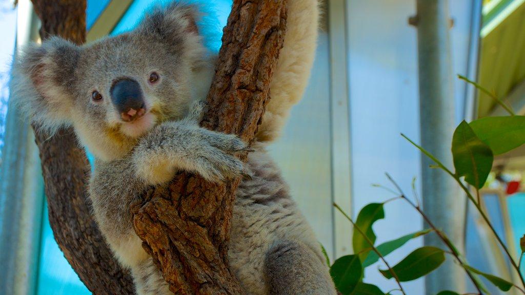 Taronga Zoo mostrando animales tiernos y animales del zoológico