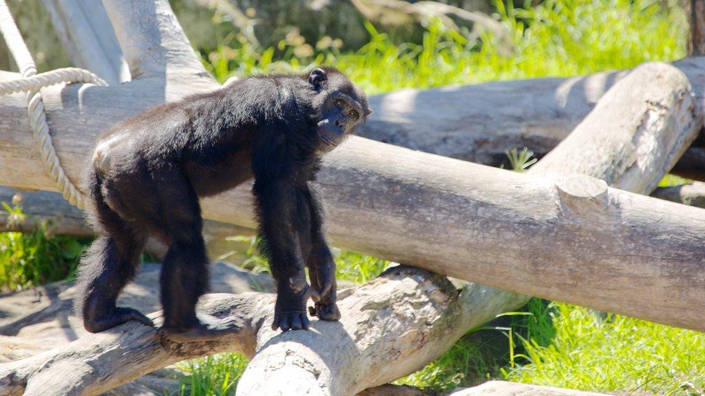 Taronga Zoo featuring animals and zoo animals