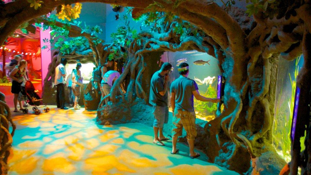 Acuario de Sídney ofreciendo vistas interiores y vida marina y también un pequeño grupo de personas