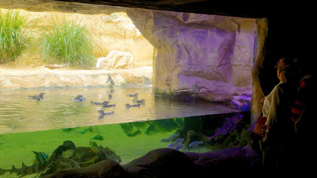 Acuario de Sídney ofreciendo vistas interiores y vida marina y también una pareja