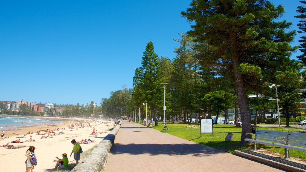 Manly Beach featuring a coastal town and a sandy beach