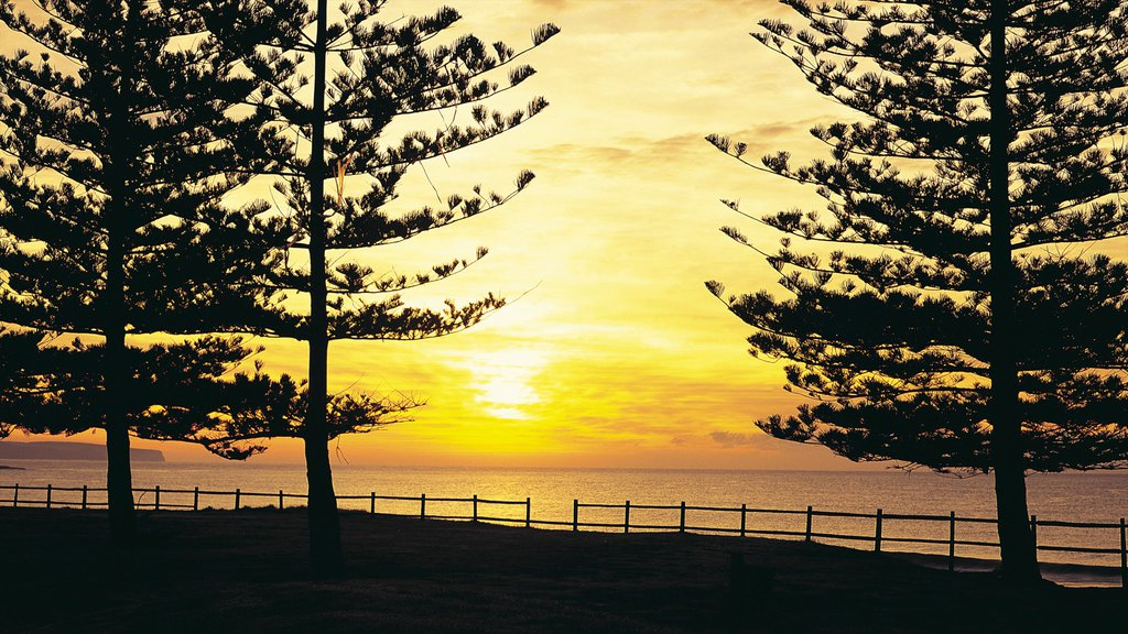 Manly Beach showing general coastal views, a sunset and landscape views
