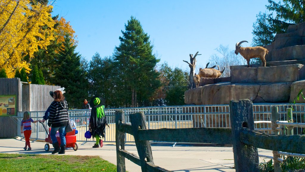 Racine Zoological Gardens which includes a park and zoo animals as well as a family