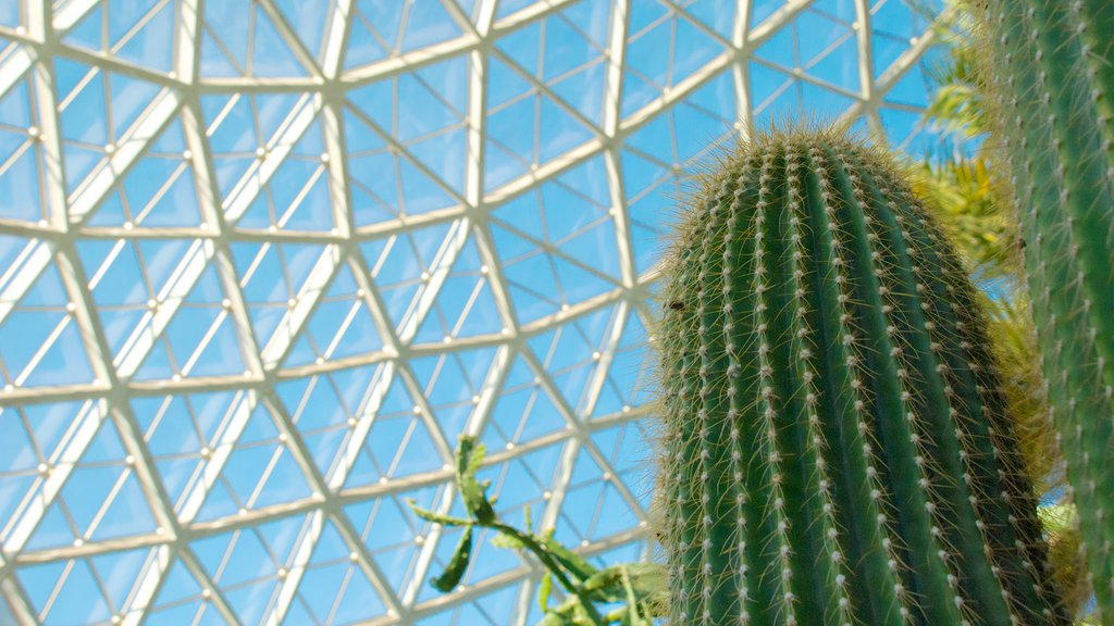 Mitchell Park Horticultural Conservatory que incluye flores