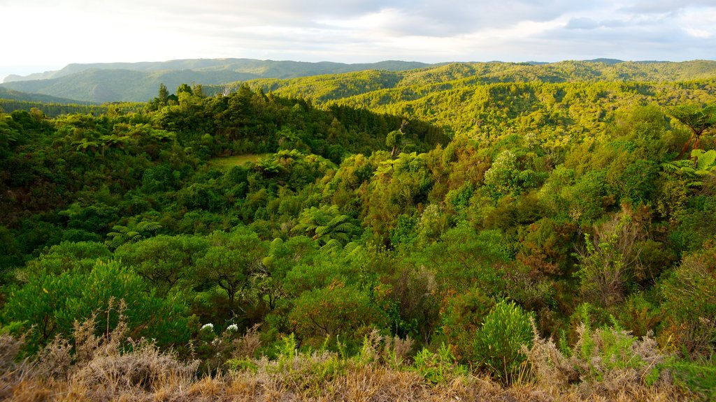 Waitakere Ranges featuring landscape views, a park and forests