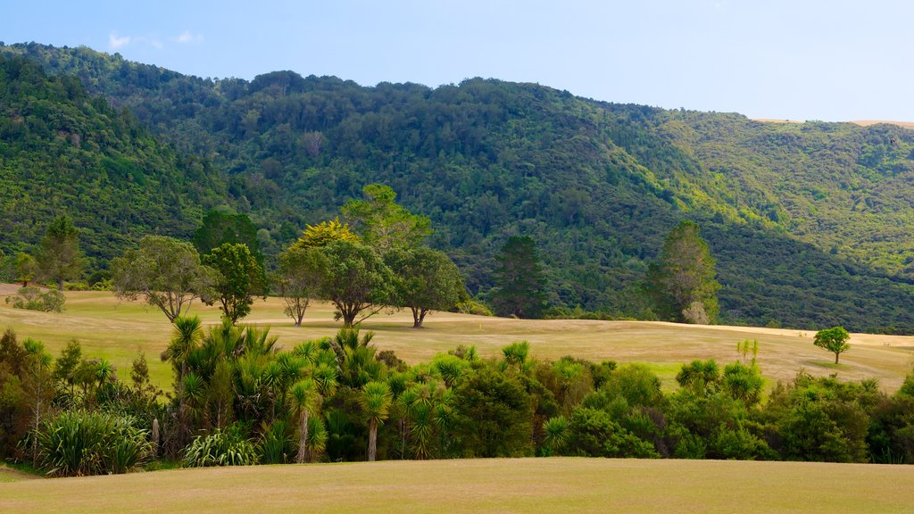 Waitakere Ranges which includes forests and landscape views