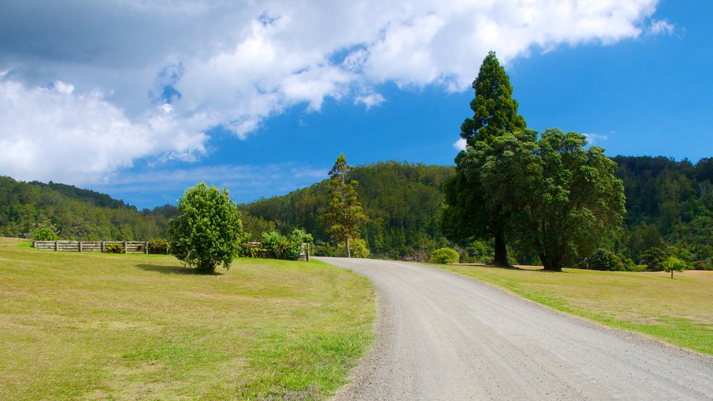 Waitakere Ranges showing tranquil scenes and landscape views