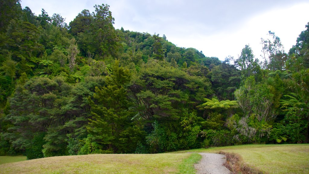 Waitakere Ranges featuring forest scenes and landscape views
