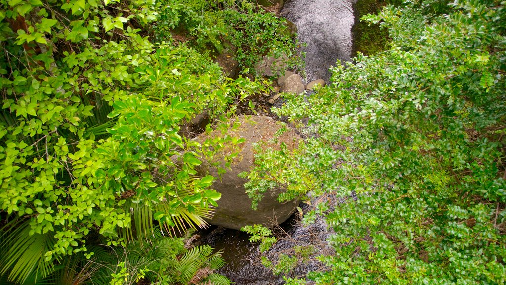 Waitakere Ranges showing forest scenes and a park