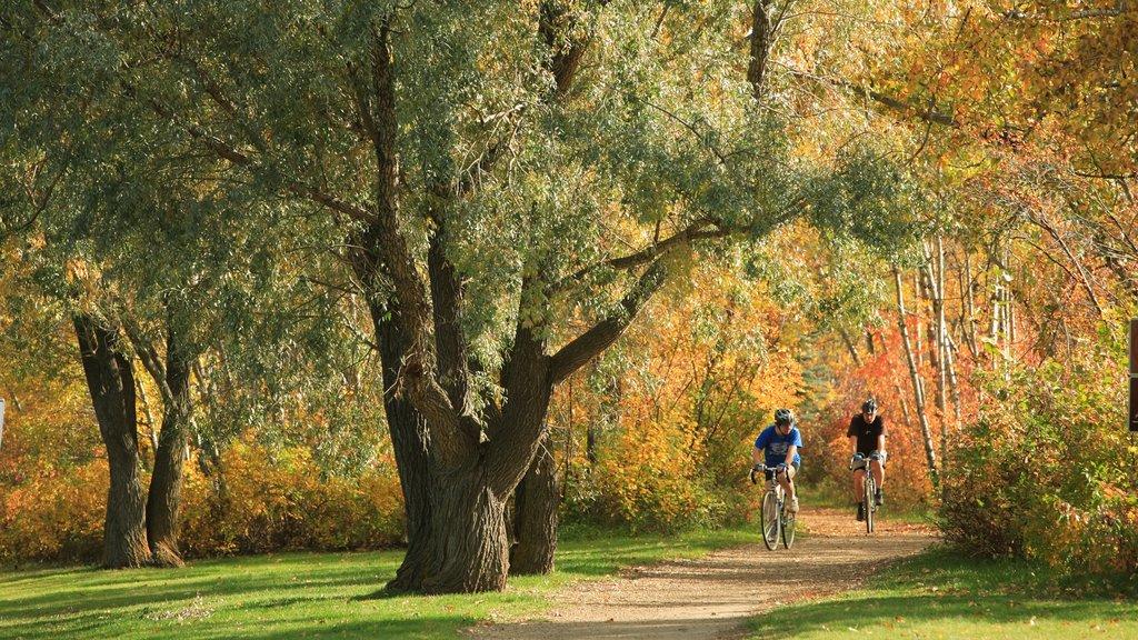 Edmonton que incluye bosques, hojas de otoño y un jardín