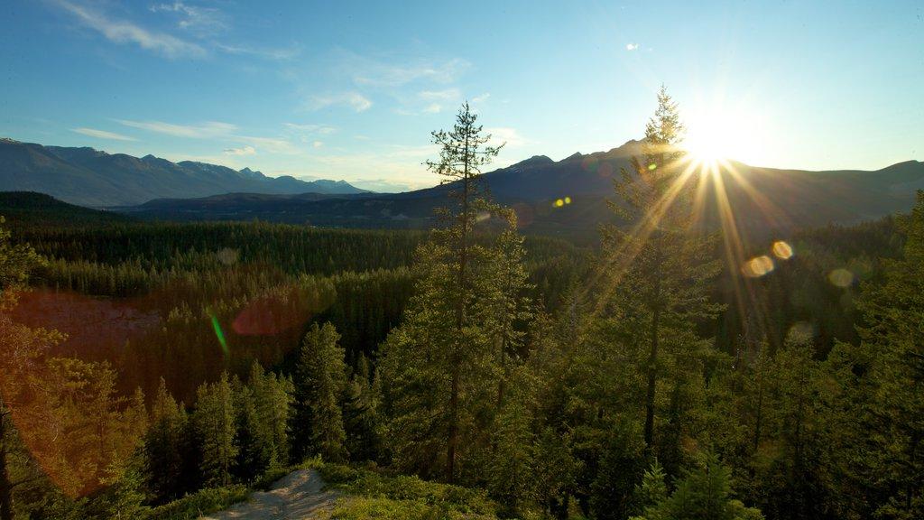 Jasper National Park que incluye un jardín, bosques y vistas de paisajes