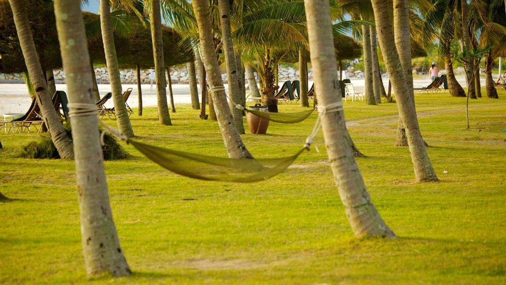 Langkawi showing tropical scenes