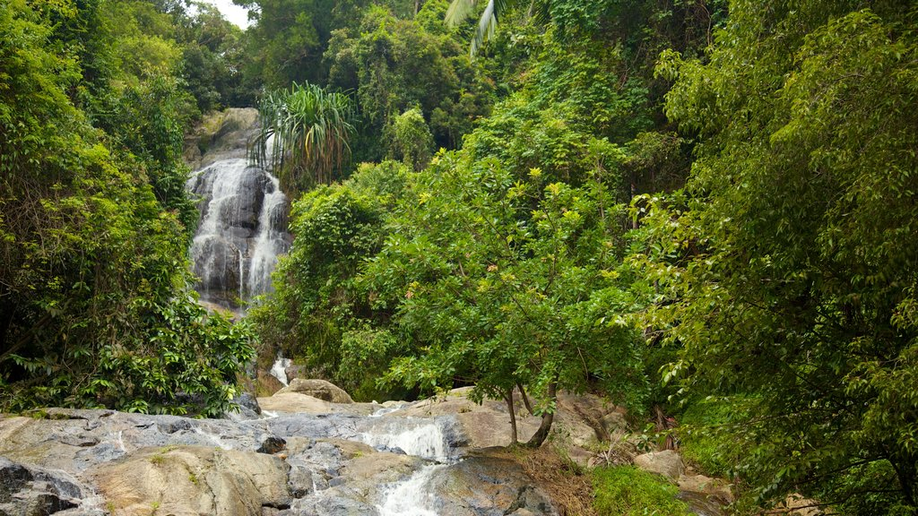 Koh Samui featuring a cascade, rainforest and landscape views