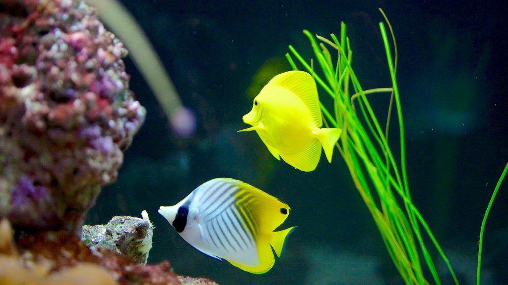 Living Planet Aquarium featuring marine life and colorful reefs