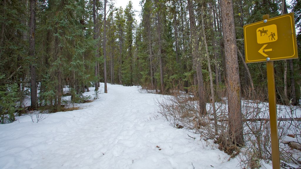 Patricia Lake showing snow, signage and forest scenes