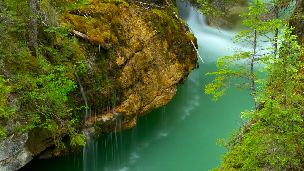 Maligne Canyon showing landscape views, a gorge or canyon and a waterfall